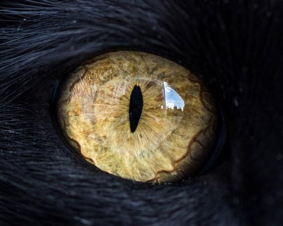 Harika fotoğraflar ile kedi gözleri - Page 1