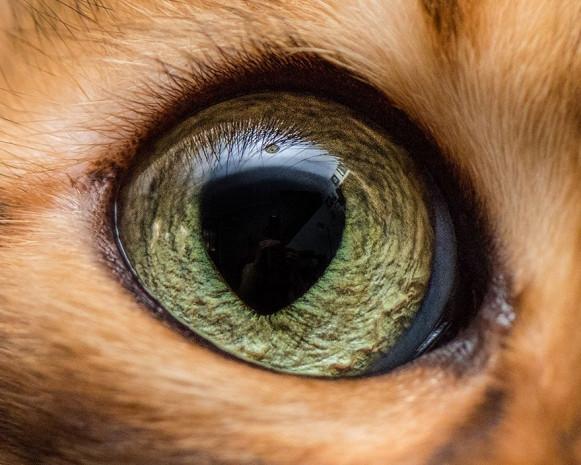 Harika fotoğraflar ile kedi gözleri - Page 3