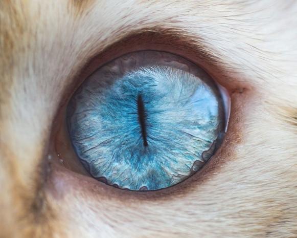 Harika fotoğraflar ile kedi gözleri - Page 4
