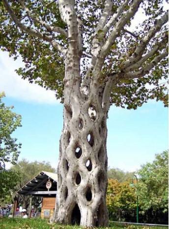 Hayrete düşüren ilginç ağaçlar - Page 1