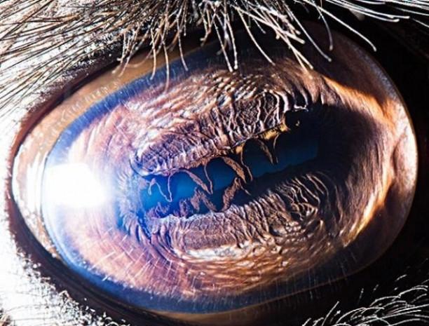 Hayvan gözlerini hiç böyle görmediniz - Page 1