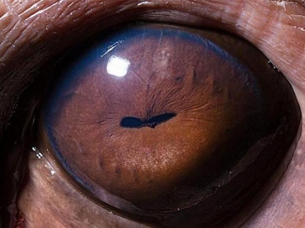 Hayvan gözlerini hiç böyle görmediniz - Page 2