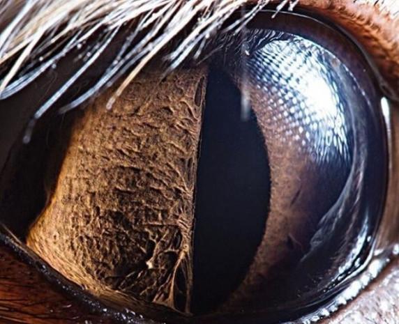 Hayvan gözlerini hiç böyle görmediniz - Page 4