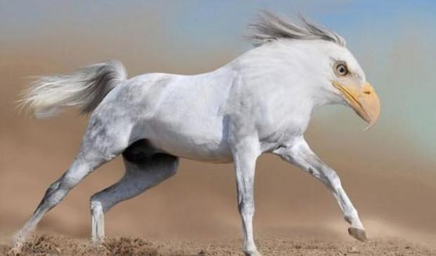 Hayvanlar alemide Photoshop'dan nasibini aldı - Page 1