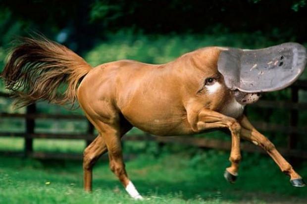 Hayvanlar alemide Photoshop'dan nasibini aldı - Page 3