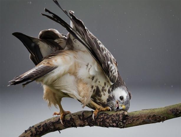 Hayvanlar aleminin tam o anda çekilen birbirinden harika fotoğrafları - Page 1