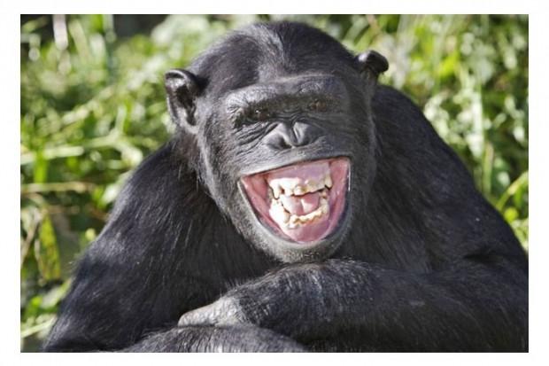Hayvanlar kahkaha atar mı? - Page 1