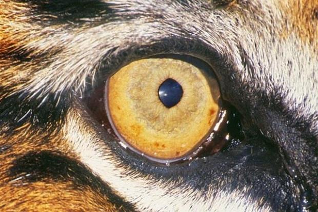 Hayvanların harika gözleri - Page 1