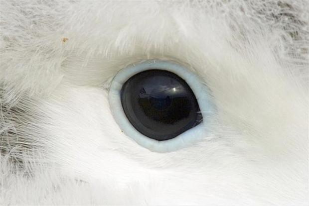 Hayvanların harika gözleri - Page 2