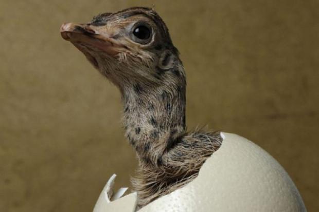 Hayvanların ilginç doğum anları - Page 1
