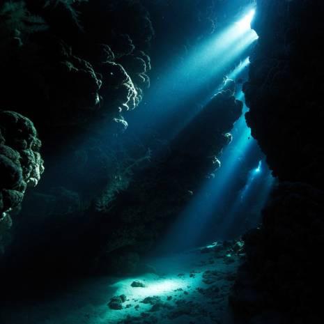 Hiç bir yerde görmediğiniz su altı canlıları! - Page 4