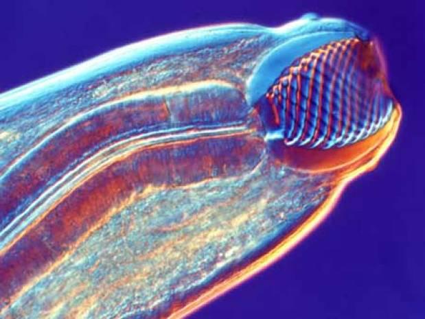 Hiç Mikroskopla çekilmiş fotoğraf gördünüz mü ? - Page 4