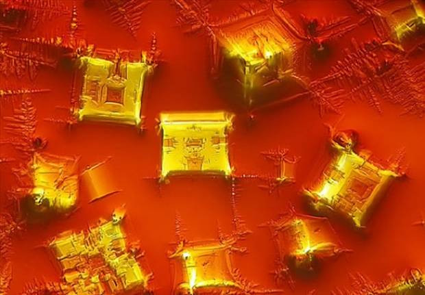 İlginç mikroskobik görüntüler - Page 1