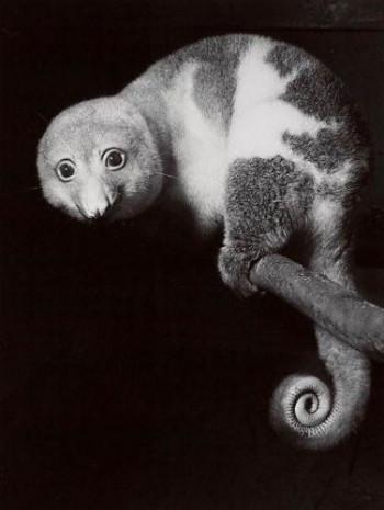 İnanılmaz yaratıklar, görmediğiniz hayvanlar! - Page 3