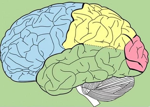 İnsan beyni hakkında bilmediğiniz 20 gerçek - Page 1