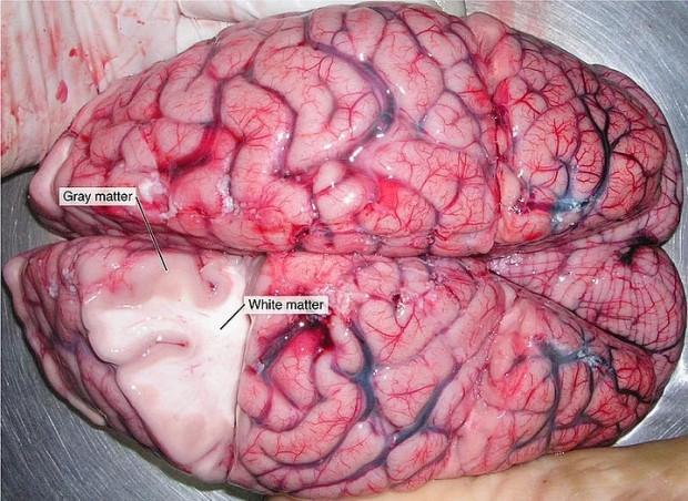 İnsan beyni hakkında bilmediğiniz gerçekler - Page 4