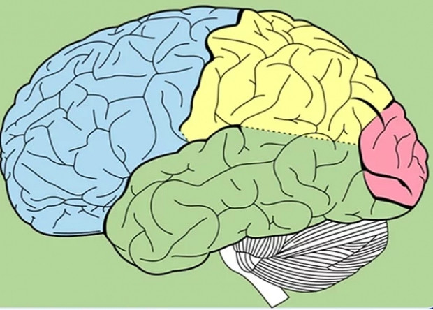 İnsan beyni hakkında bilmediğiniz ilginç gerçekler-2 - Page 1