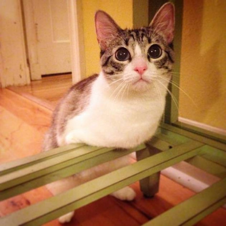 İnternetin yeni fenomeni iki ayaklı kedi - Page 2