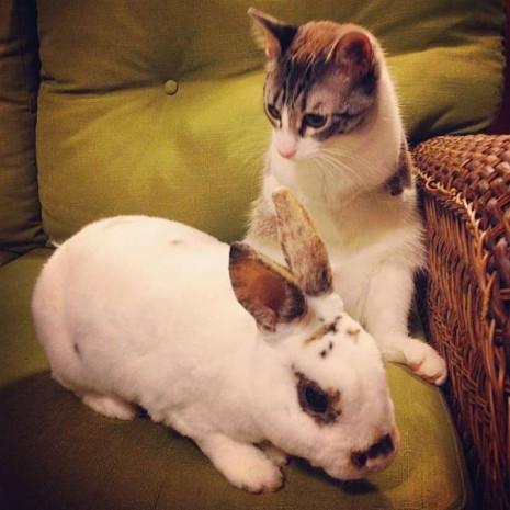 İnternetin yeni fenomeni iki ayaklı kedi - Page 3