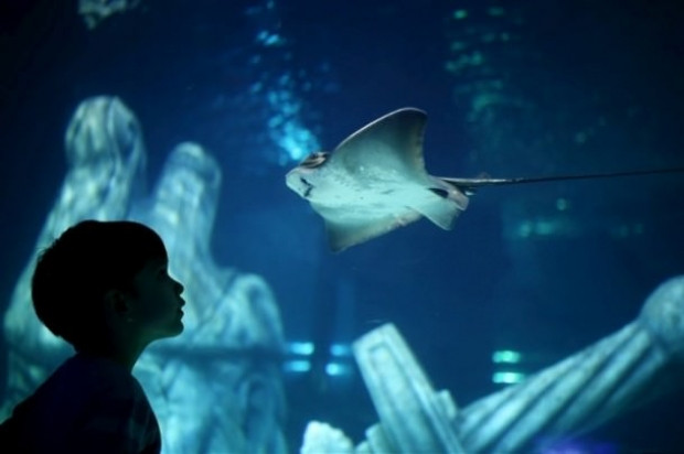 İstanbul Sea Life Akvaryumu'nun açılışı gerçekleşti - Page 2
