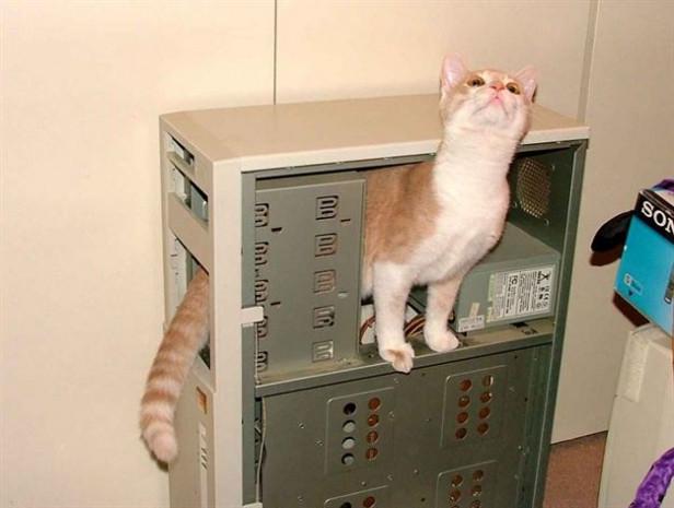 İşte bilim tarihine geçmiş kediler - Page 2