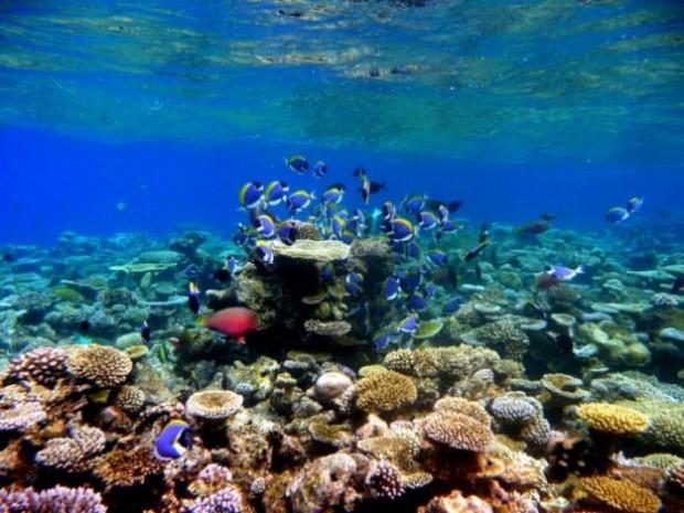 İşte birbirinden güzel mercan fotoğrafları - Page 1