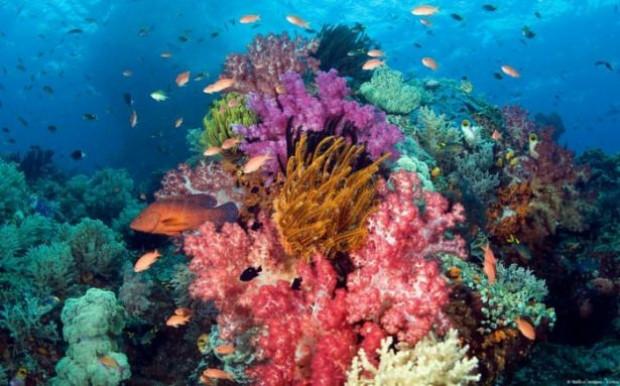 İşte birbirinden güzel mercan fotoğrafları - Page 4