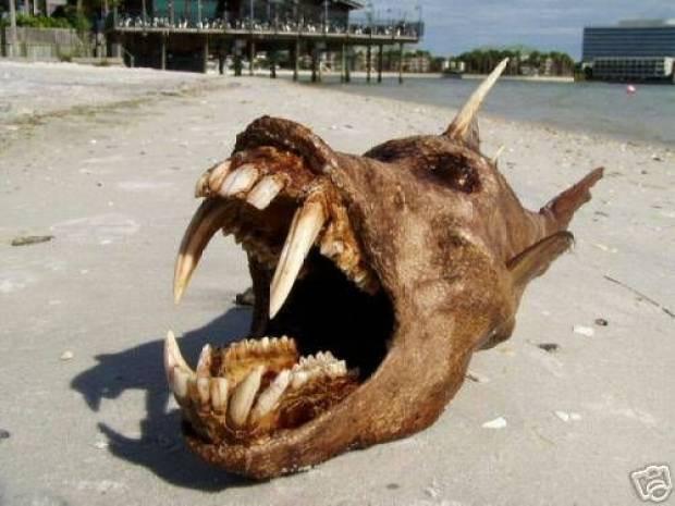 İşte denizden çıkan canavarlar! - Page 1