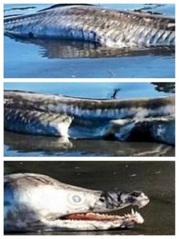 İşte denizlerin derinliklerinde yaşayan en tuhaf canlılar - Page 3