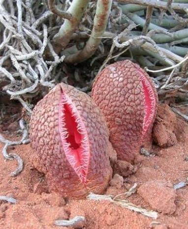 İşte doğanın en tuhaf ve uzak durulacak bitki türleri - Page 1
