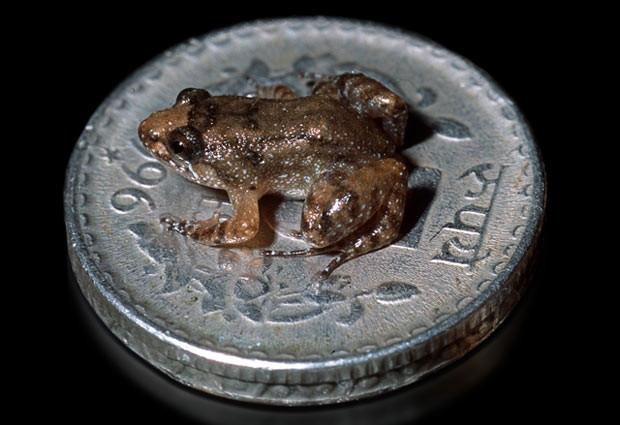 İşte dünyanın en küçük kurbağası - Page 3