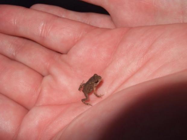 İşte dünyanın en küçük kurbağası - Page 4