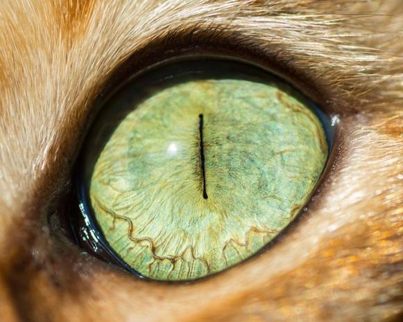 İşte kedi gözlerinin birbirinden harika 15 makro fotoğrafı - Page 1