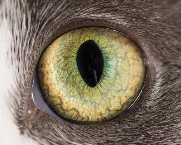 İşte kedi gözlerinin birbirinden harika 15 makro fotoğrafı - Page 2