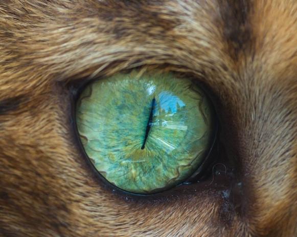 İşte kedi gözlerinin birbirinden harika 15 makro fotoğrafı - Page 3