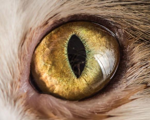 İşte kedi gözlerinin birbirinden harika 15 makro fotoğrafı - Page 4