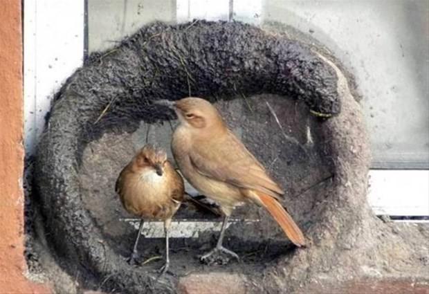 İşte kuşları nasıl yuva yapar fotoğrafları - Page 2