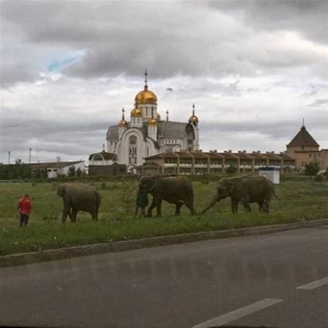 İşte sadece Rusya'da görebileceğiniz birbirinden ilginç kareler - Page 1