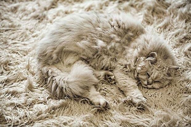 Kamuflaj konusunda vahşi hayvanlardan bile daha iyi işler çıkartmış 21 evcil kedi - Page 1