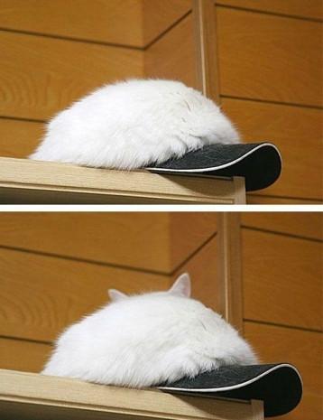 Kamuflaj konusunda vahşi hayvanlardan bile daha iyi işler çıkartmış 21 evcil kedi - Page 3