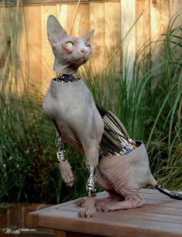 Karşınızda robot kediler - Page 1