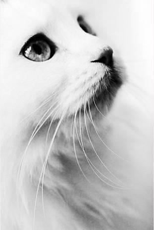 Kedi canını senin! - Page 2