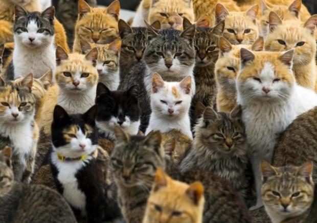 Kediler adayı işgal etti! - Page 3