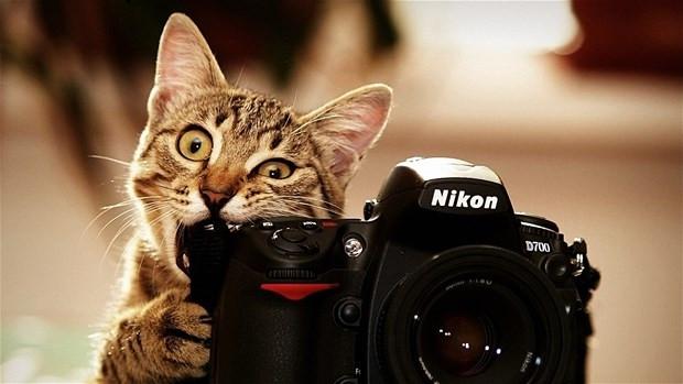 Kedilerin selfiesi güldürdü - Page 1