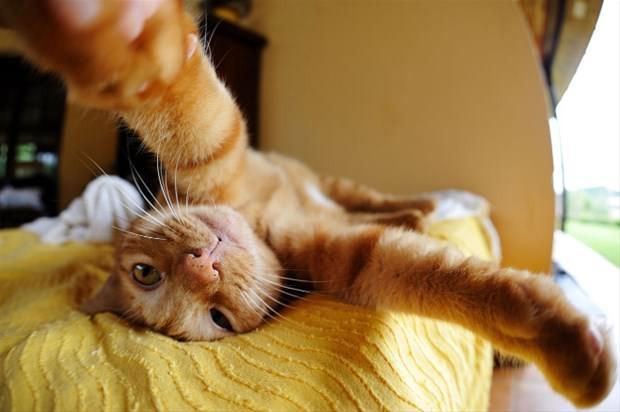 Kedilerin selfiesi güldürdü - Page 4