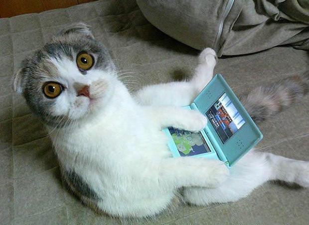 Kedilerin teknoloji ile imtihanı - Page 1