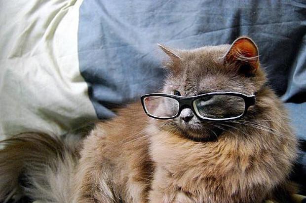 Kedilerin teknoloji ile imtihanı - Page 3