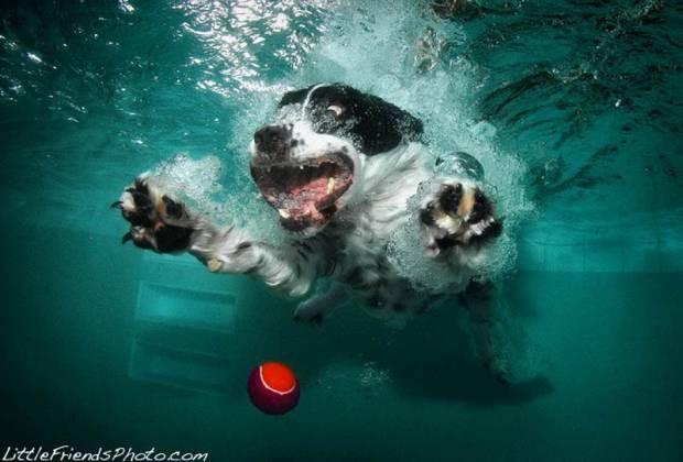 Köpeklerin su altındaki dalışlarından ilginç kareler! -GALERİ - Page 1