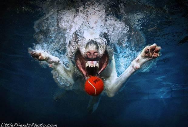Köpeklerin su altındaki dalışlarından ilginç kareler! -GALERİ - Page 2
