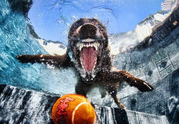 Köpeklerin su altındaki dalışlarından ilginç kareler! -GALERİ - Page 3